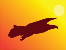 Vôo da águia durante o por do sol Foto de Stock
