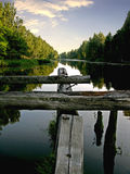Vôo da árvore à superfície da àgua Foto de Stock