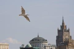 Vôo da gaivota imagem de stock royalty free
