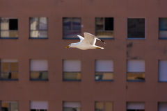 Vôo da gaivota na frente dos indicadores imagem de stock