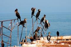 Vôo de pássaros Imagens de Stock