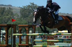 Vôo do cavalo Fotografia de Stock Royalty Free