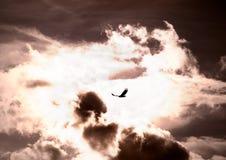 Vôo do pássaro através da tempestade Foto de Stock Royalty Free