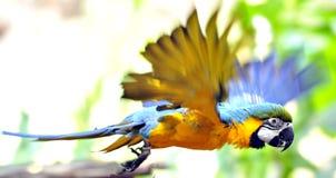 Vôo do papagaio fotos de stock