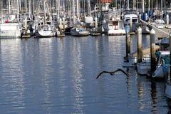 Vôo do porto Fotografia de Stock Royalty Free