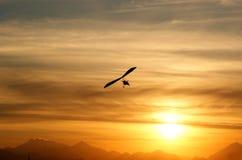 Vôo no por do sol Fotografia de Stock Royalty Free