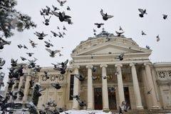 Vögel über dem rumänischen Atheneum Lizenzfreie Stockbilder