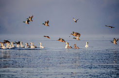 Vögel über der Ostsee Stockfotos