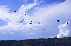 Vögel Lizenzfreie Stockfotografie