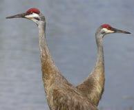 Vögel Stockfotos