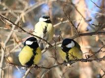 vögel Lizenzfreie Stockbilder