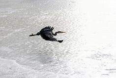 Vögel Stockfoto
