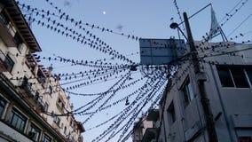 Vögel in Acapulco im Stadtzentrum gelegen Stockfoto