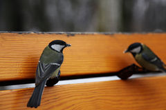 Vögel auf Bank Lizenzfreies Stockbild