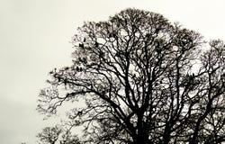 Vögel auf Baum stockbild