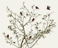 Vögel auf Baum Stockfoto