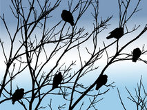 Vögel auf Baum Stockfotografie