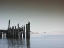 Vögel auf Bodega Schacht-Pier lizenzfreies stockfoto