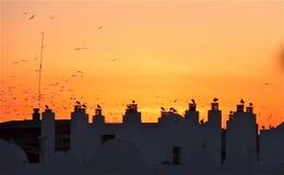 Vögel auf Dachspitzen Stockbilder