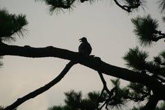 Vögel auf dem Baum stockbilder