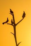 Vögel auf dem Baum Stockfotografie