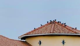 Vögel auf dem Dach stockbild