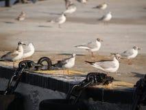 Vögel auf dem Dock stockbilder