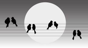 Vögel auf dem Draht stock abbildung