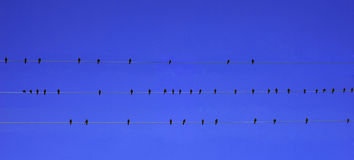 Vögel auf dem Draht Lizenzfreies Stockfoto