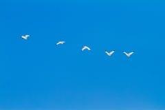 Vögel auf dem Himmel Stockfotografie