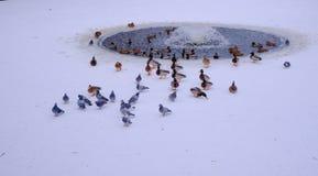 Vögel auf dem Hintergrund eines kleinen Brunnens Lizenzfreie Stockfotos