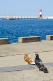 Vögel auf dem Meer Lizenzfreies Stockfoto