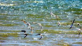 Vögel auf dem Strand stockbilder