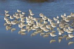 Vögel auf dem Strand Lizenzfreies Stockfoto