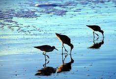 Vögel auf dem Strand Lizenzfreies Stockbild