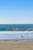 Vögel auf dem Strand Lizenzfreie Stockfotos