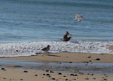 Vögel auf dem Strand Stockfoto