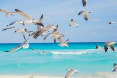 Vögel auf dem Strand Hochfliegende Seemöwe über dem Ozean Lizenzfreie Stockfotos