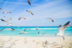 Vögel auf dem Strand Hochfliegende Seemöwe über dem Ozean Stockfotografie