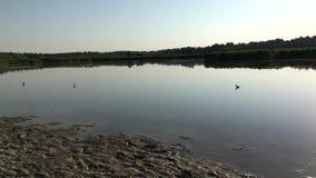 Vögel auf dem Teich stock footage