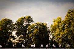 Vögel auf dem Wasser Stockfotos
