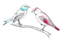 Vögel auf dem Zweig Stockfotografie