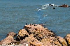 Vögel auf den Felsen im Meer Stockfotos