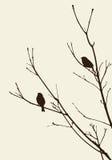 Vögel auf den Zweigen Stockbilder