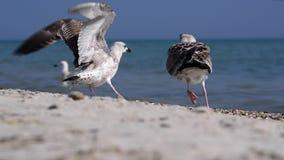 Vögel auf der Küste stock video footage