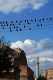 Vögel auf Drähten über der alten Stadt Lizenzfreie Stockbilder