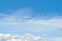 Vögel auf Drähten Stockfotos