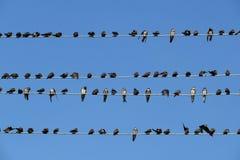 Vögel auf Drähten Stockfoto