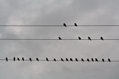 Vögel auf Draht Stockbilder