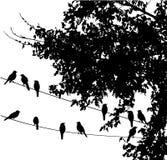 Vögel auf Draht stock abbildung